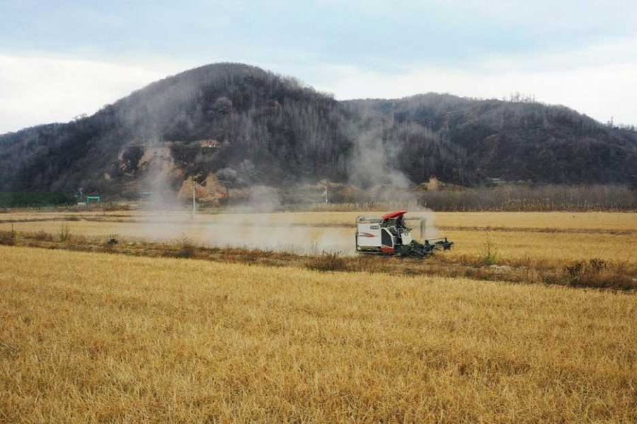 China reduces greenhouse gas emissions in rice production