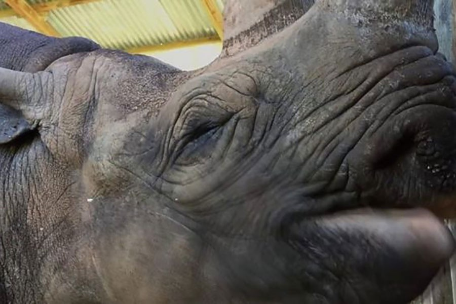 'World's oldest rhino' Fausta dies in Tanzania aged 57