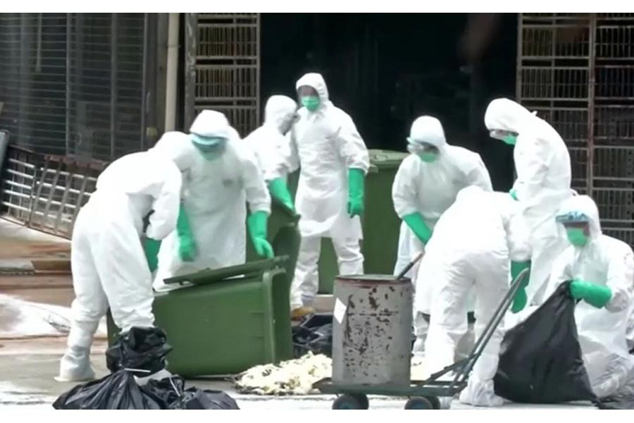 China  reports bird flu outbreak