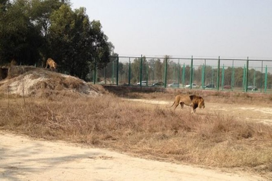 Boy's remains found in lion enclosure at Pakistan zoo