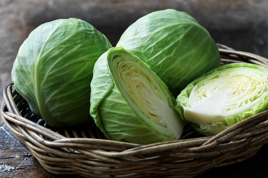 Natore farmers growing cabbage in eco-friendly way