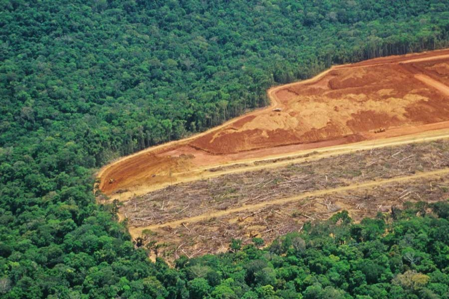 Brazil's monthly Amazon deforestation hits highest level in five years