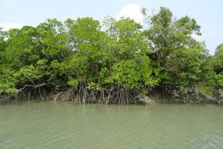 Important coastal barrier at risk from increased pollution