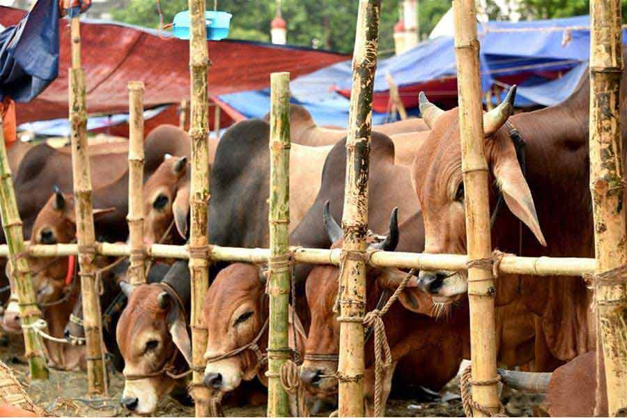 Eid cattle markets during pandemic: A six-point guideline