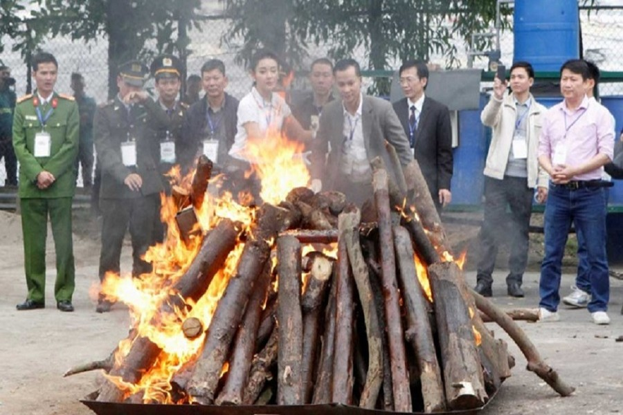 Seized elephant ivory and rhino horns are destroyed by Vietnamese authorities in Hanoi November 12, 2016 — Reuters/Files