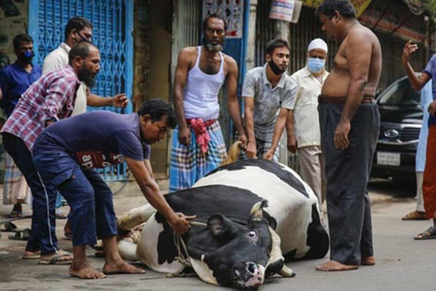 Random cattle slaughter, health rules defiance mark Eid in Dhaka