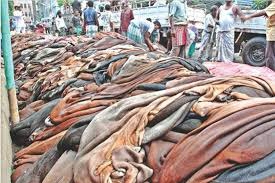 BGB on high alert in Benapole to check rawhide smuggling