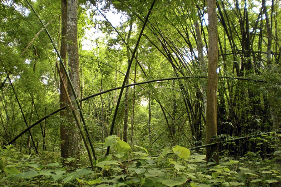 Preserving the Bangladesh's dense native forests is essential to fight the global worming