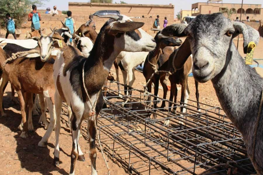 What Covid-19 movement restrictions mean for nomadic pastoralists in the Sahel
