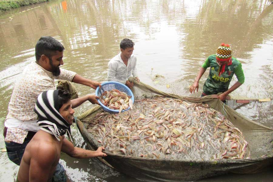 Support for fish farmers