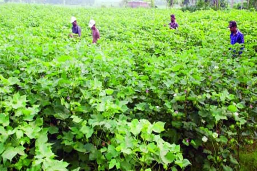 Youth engagement in agriculture in Bangladesh