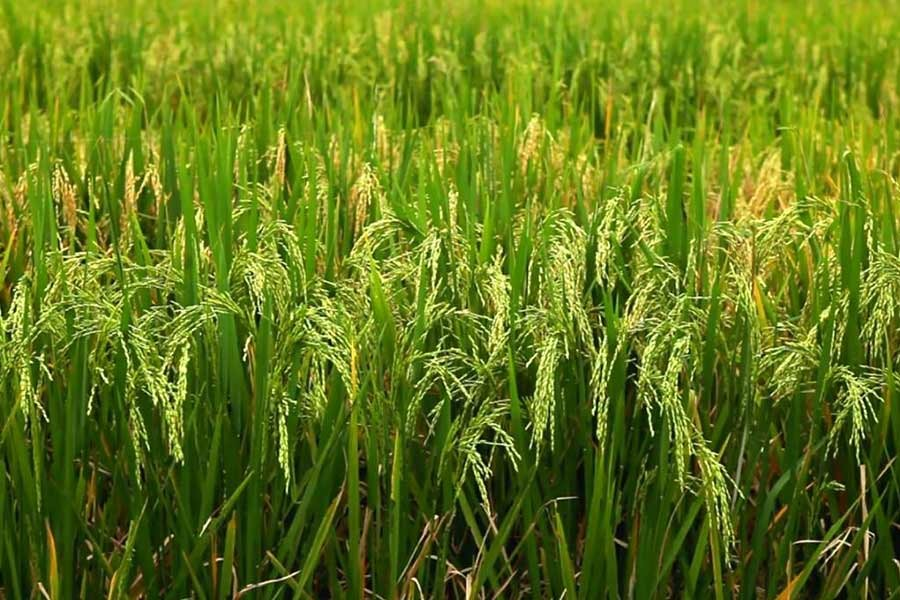 Govt to appoint agricultural engineers for expediting farm mechanisation
