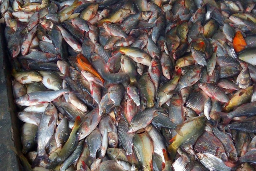 The return of small native fishes