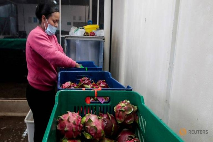Seriously! Gujarat to rename Dragon Fruit as it looks like lotus