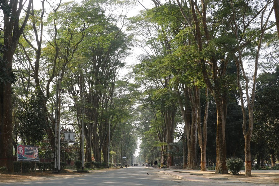 The authority of the Rajshahi University has recently taken a massive greening drive on the varsity campus — FE photo