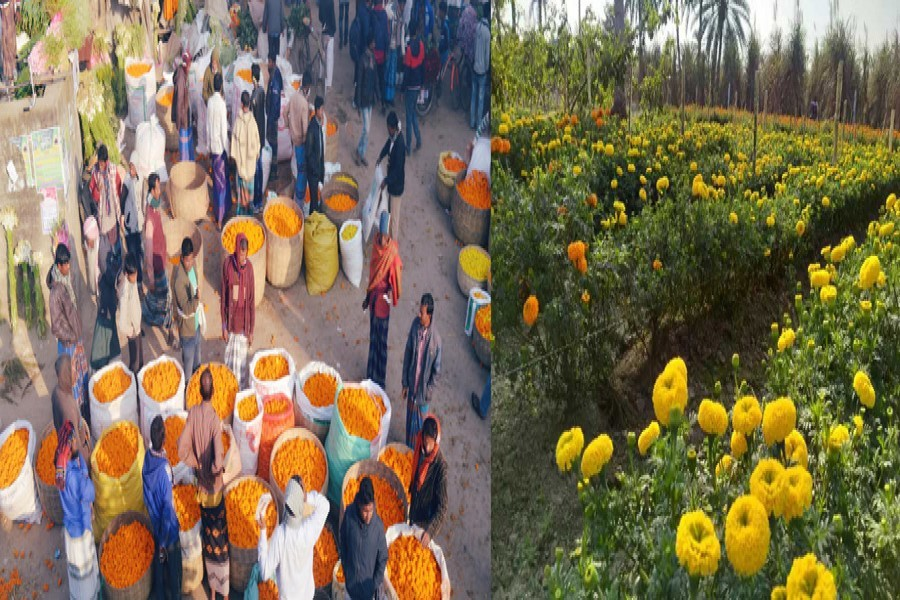 A view of Godkhali market in Jashore district with different types of flowers including roses, gerberas, gladiolus, tuberose, corn calendula, chrysanthemum and gypsies on Saturday (L), and a partial view of a marigold flower garden in Jhenidah district — FE Photos