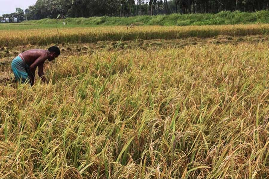 Govt distributes Tk 3.72b incentives to 5.7m farmers