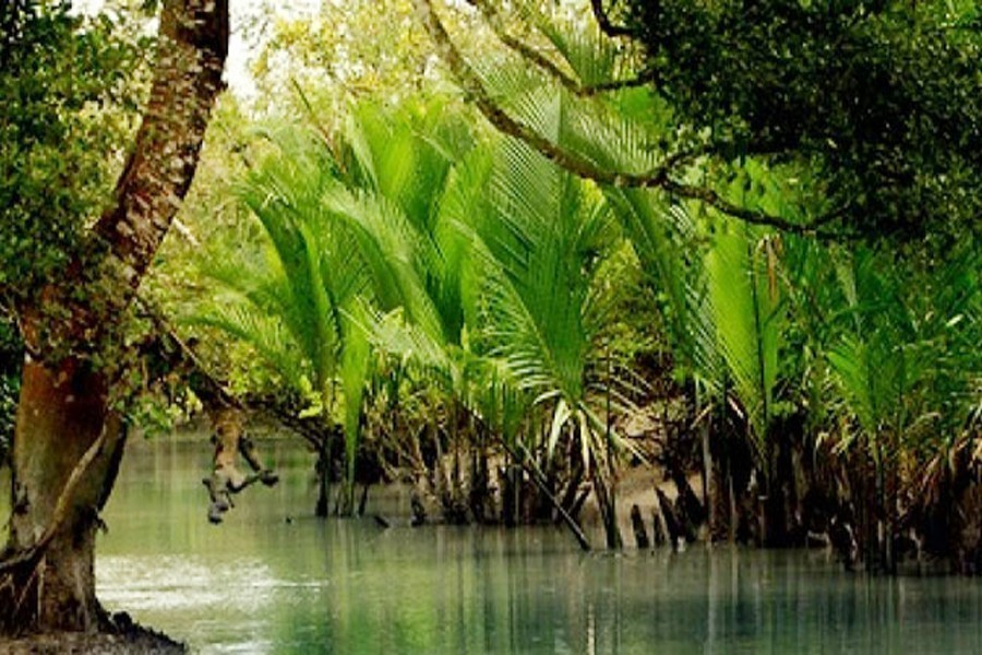 Saving the Sunderbans