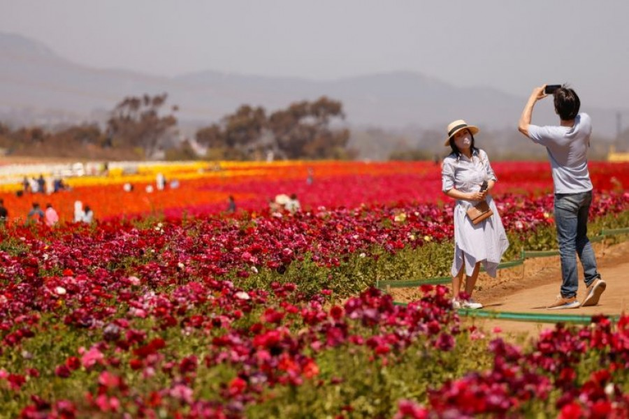 "Visitors take pictures at ""The Flower Fields"" in Carlsbad, California, on March 31, 2021.PHOTO: REUTERS"