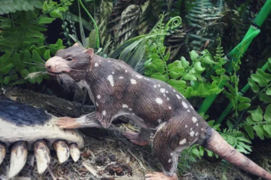 Chilean scientists unearth skunk that walked among dinosaurs