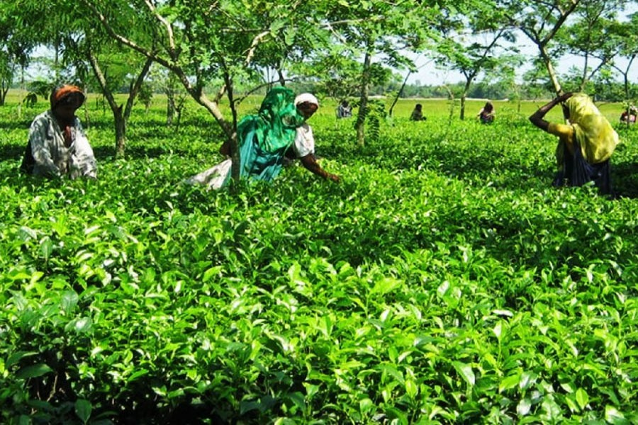 Call to involve tea workers in mainstream society