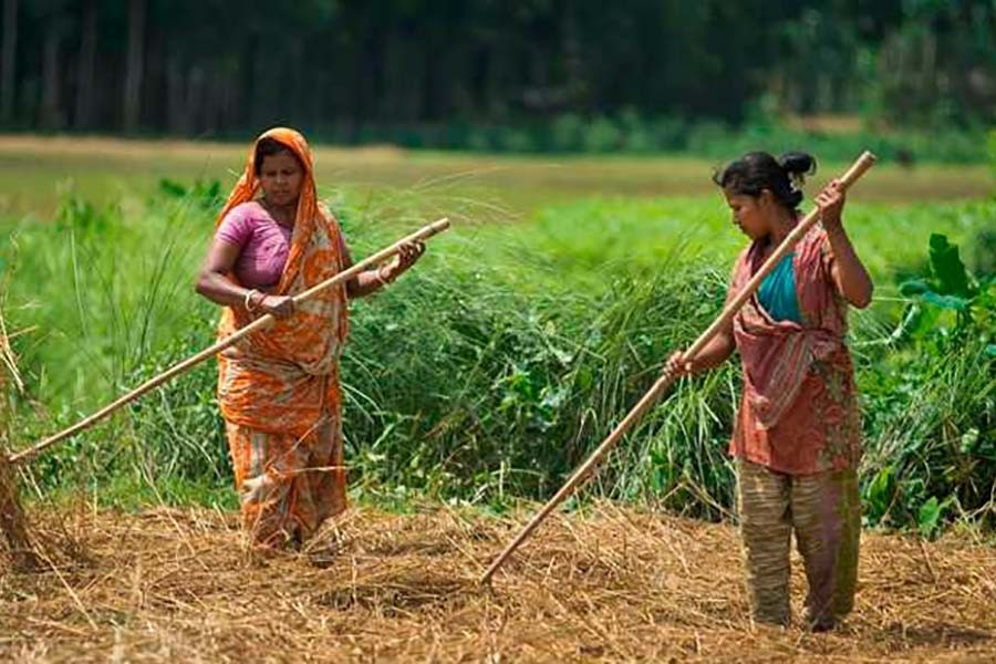 Women in agricultural work