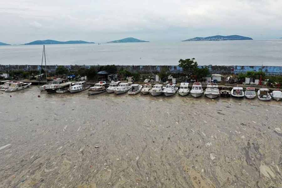 """A general view shows a thick layer of """"sea snot"""", consisting of a wide variety of microorganisms, that covers the sea near the coast in the Bostanci harbour in Istanbul –Reuters file photo"""