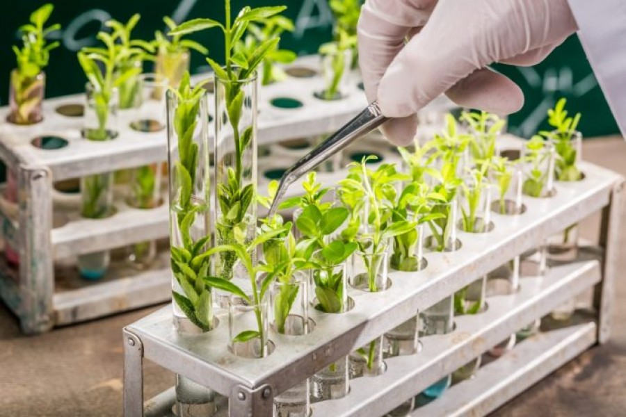 Plant breeding: Answer to food security in Bangladesh