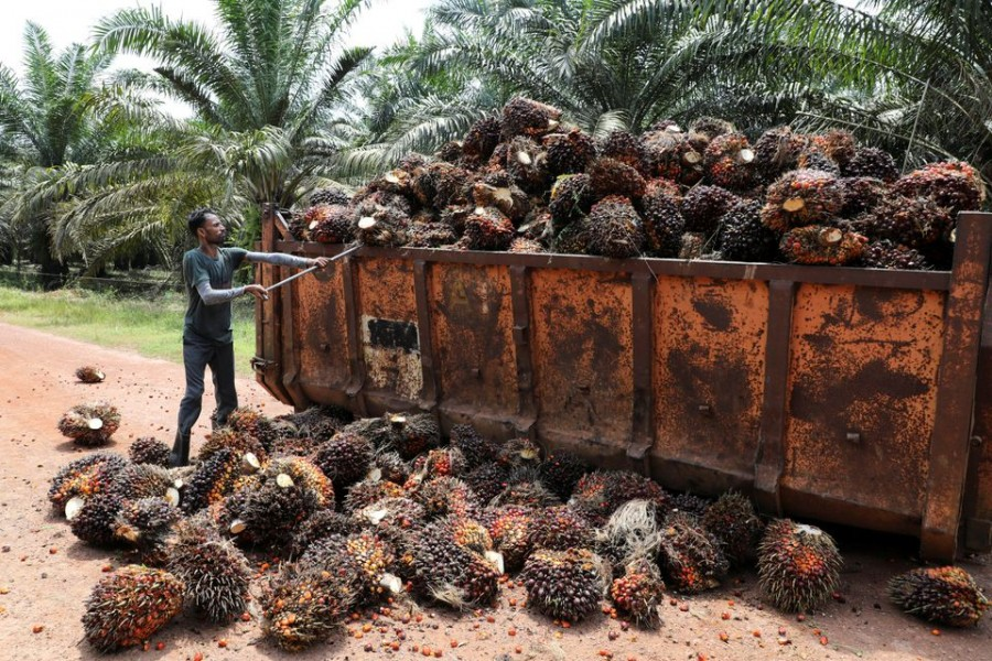 A worker loads palm oil fruit bunches at an oil palm plantation in Slim River, Malaysia August 12, 2021. REUTERS/Lim Huey Teng