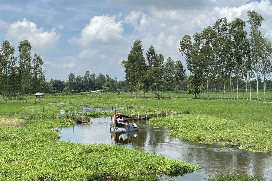 Photo shows the integrated crop farming at Ulipur upazila in Kurigram — FE Photo