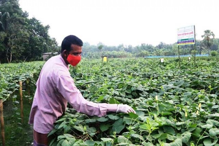 Focusing on agriculture, youth in post-pandemic recovery