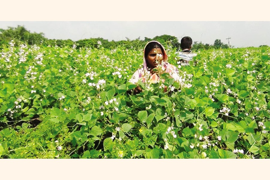 Banking on successful  agriculture for progress
